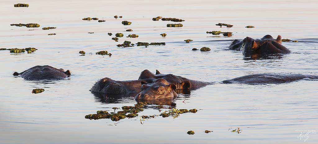 safari in Chobe Nationaal Park