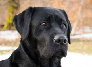 Wat is het beste hondenras