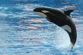 Orka, Alle homoseksuele dieren op een rij