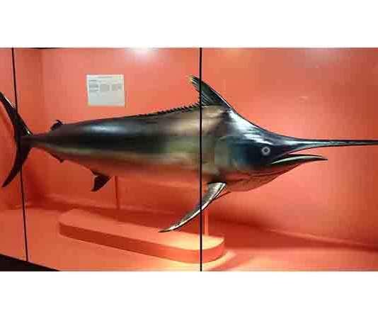 Wat zijn de snelste vissen ter wereld?
