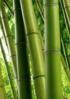 Visconti_Asian Collection_bamboo photo