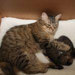 Ronja en kittens 18-02-2010