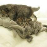 Kittens 01-11-10