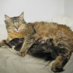 Emmy and kittens 16-05-2011