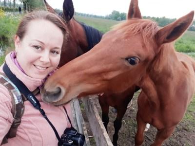 Paarden - De Bilt