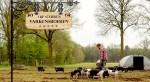 Dit zijn de meest diervriendelijke varkensboeren van Nederland