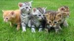 Protest tegen middeleeuwse kattenjacht in Groningen