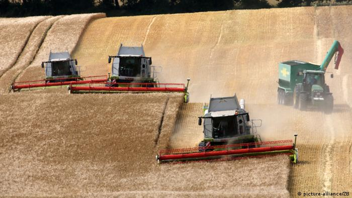 Harvesting (picture-alliance/ZB)