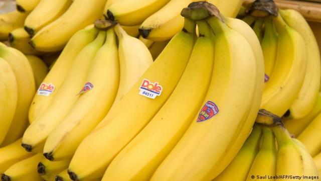 Symbolbild Bananen Panama-Krankheit