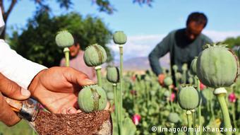 Afghanistan Opiumproduktion (Imago/Omid Khanzada)