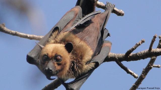 Bat hanging in a tree