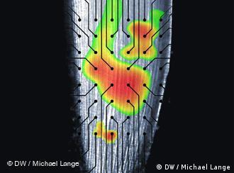 """Resultado de imagem para """"funções cerebrais"""" nas raízes das plantas"""