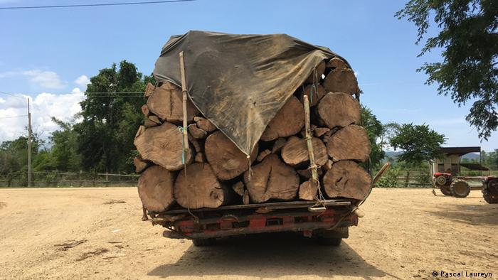 A truck filled with timber in the Aoral Wildlife Sanctuary, Cambodia (Pascal Laureyn )