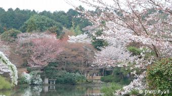 Japan - Travel Report Pictures of the Cherry Blossom Festival in Japan: Kyoto - The Philosopher's Path (DW / J Ryall)
