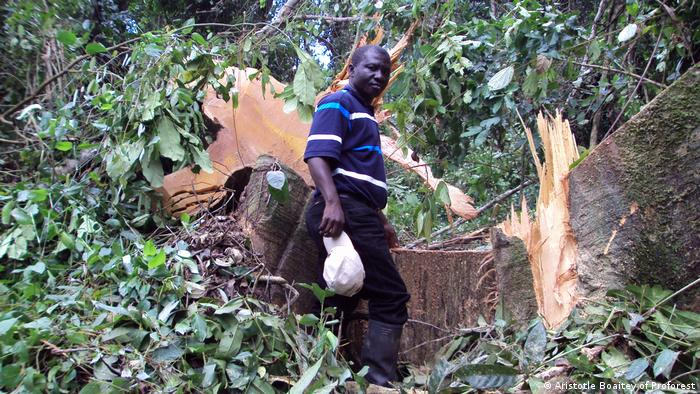 Abraham Baffoe from Proforest stands in from of a fallen tree.