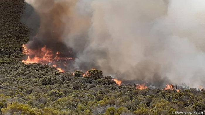 The fire burns through tree heather