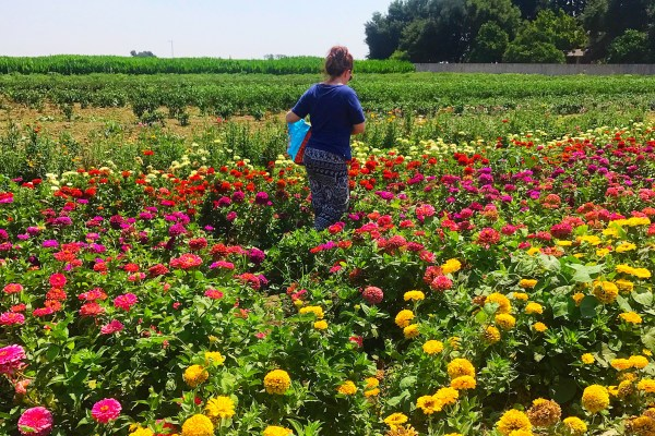 Flower Fields Forever – Larry's Produce