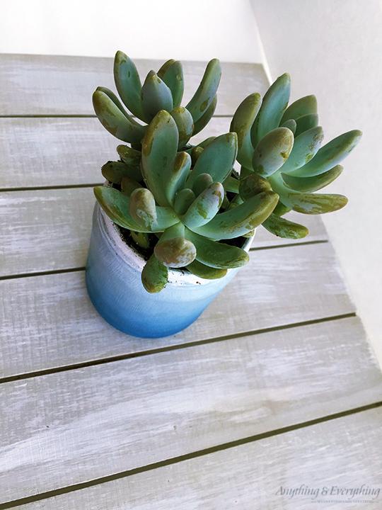 Succulents-in-a-jar