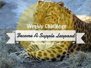 Become a Supple Leopard