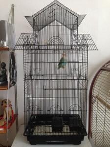 vogelkooi groot