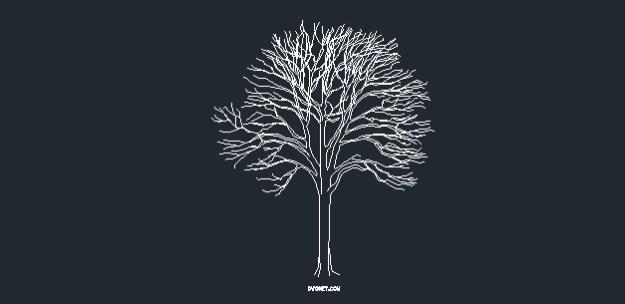 Tree dwg cad block 204