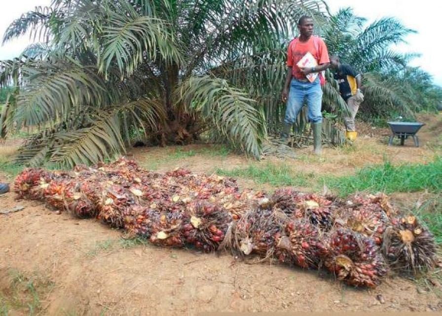 Gabon-OLAM-PALM-LES-DÉFIS-À-VENIR