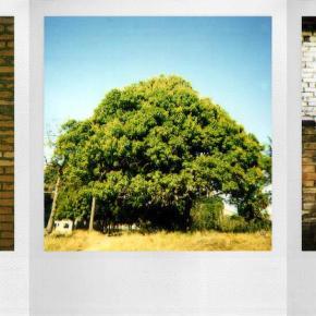 Polaroid 600, O filme