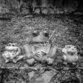 Brownie Pinhole DXFoto 01