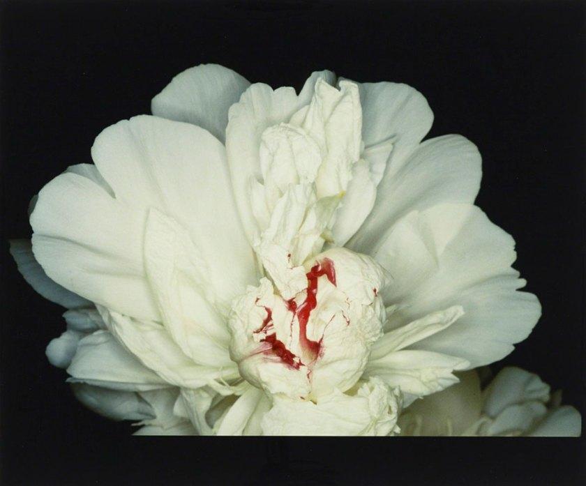 Feast of Angels : Sex Scenes, 1992 © Nobuyoshi Araki / Courtesy Taka Ishii Gallery