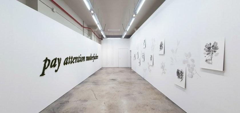 gabinete-de-dibujos-ernesto-casero-las-plantas-perdidas-05