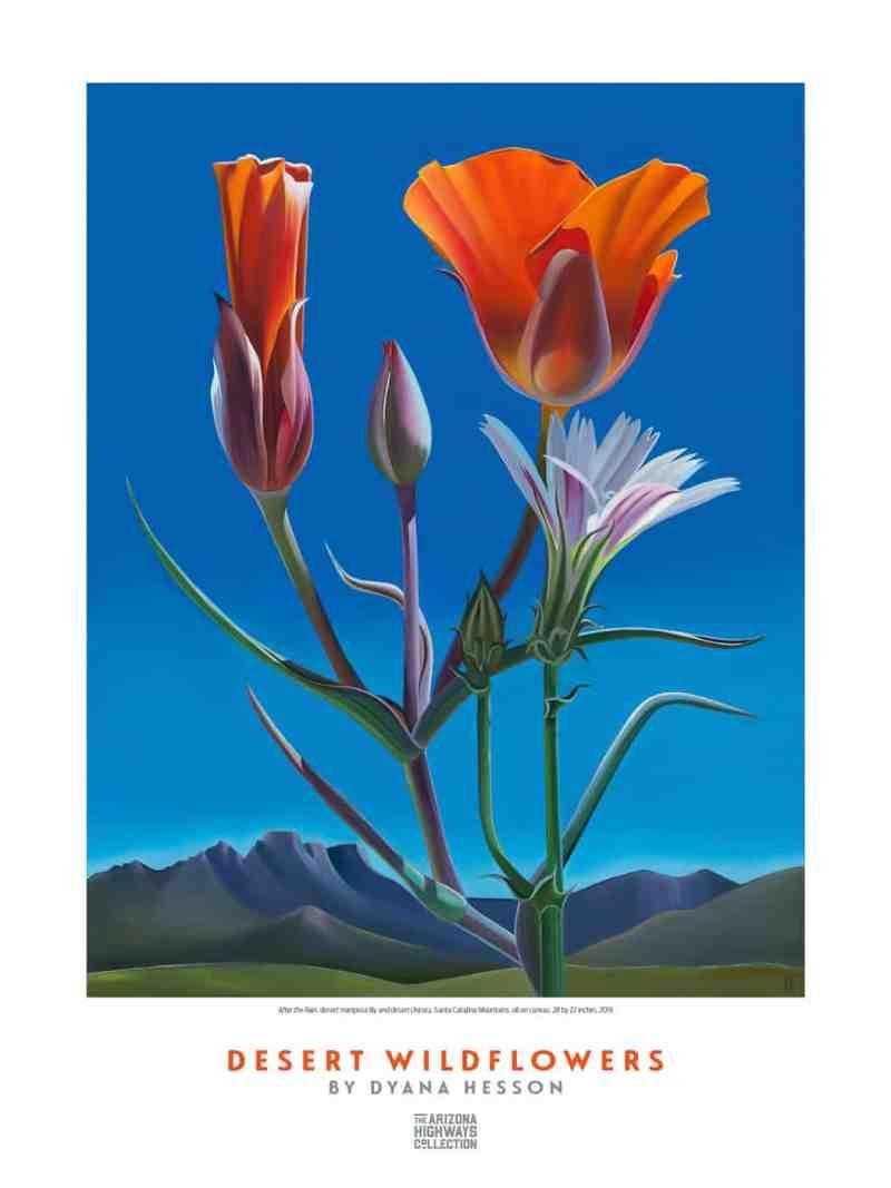 Arizona Highways Dyana Hesson Wildflower poster