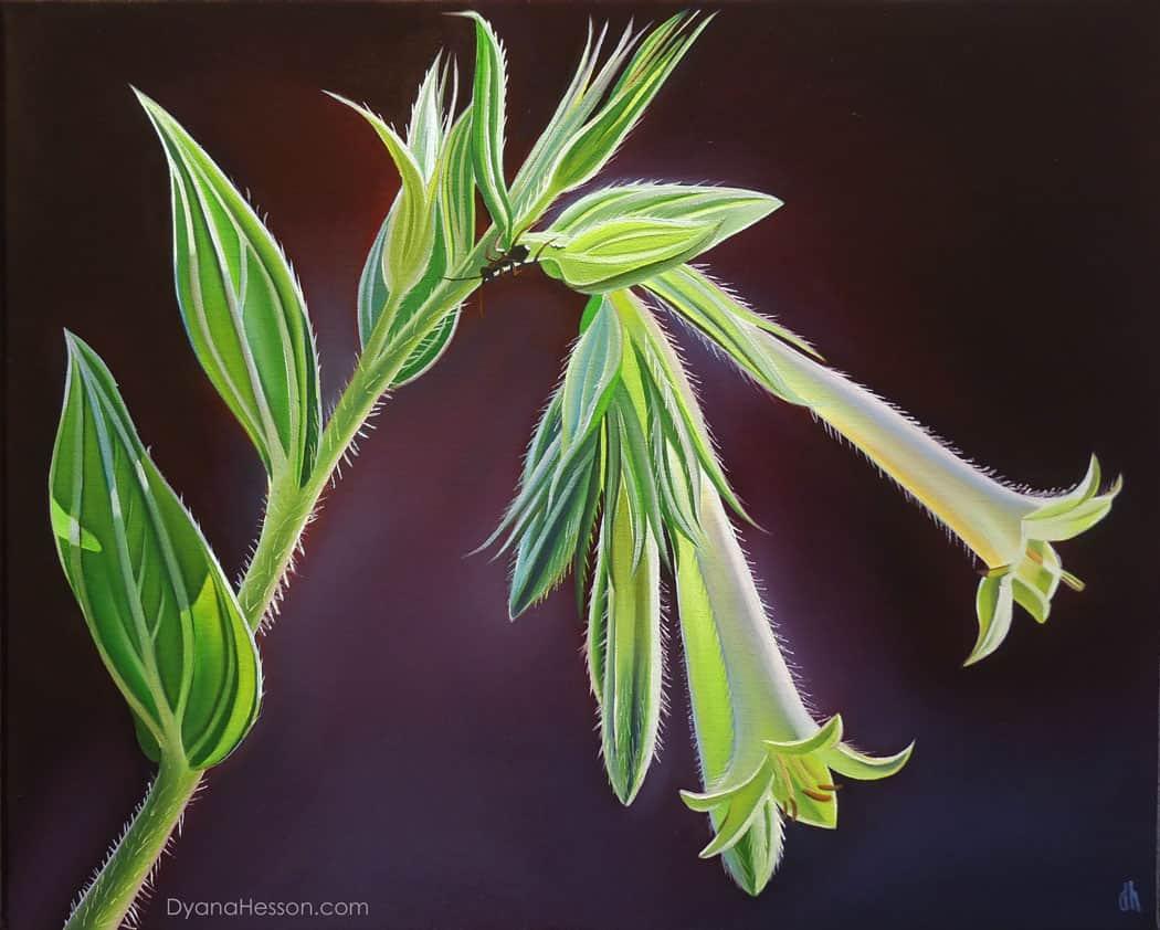 Morning Light, Green-Flowered Macromeria, X Diamond Ranch, AZ 16x20 oil on canvas Dyana Hesson