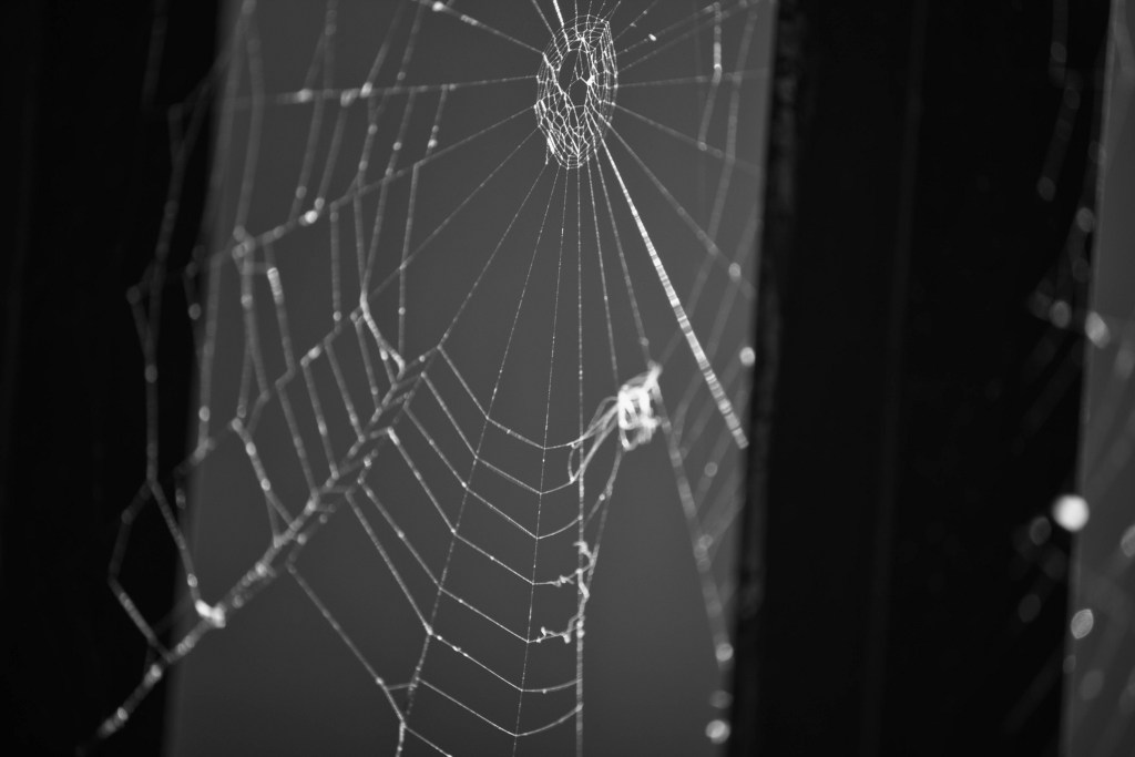 Spiderweb on Iron Gate