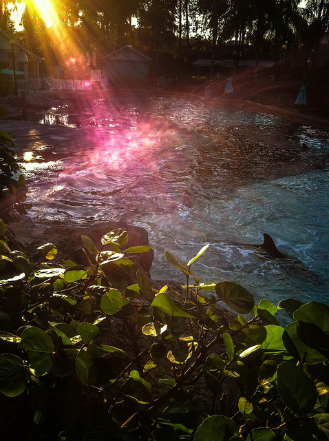 Amazing Afternoon Sunlight at Dolphin Cove