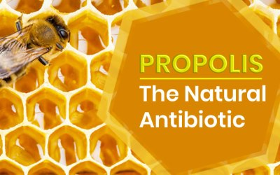 Top 5 Benefits of Propolis