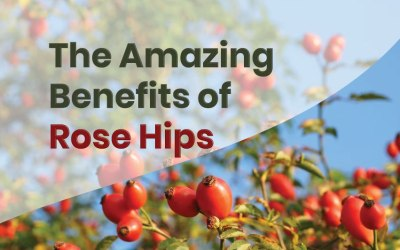 The Amazing Benefits of Rose Hips