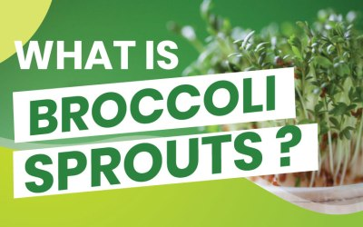 The Amazing Benefits of Broccoli Sprouts