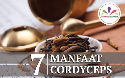 7 Manfaat Cordyceps