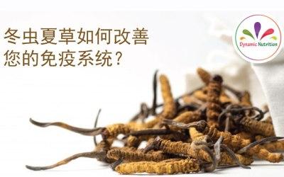 冬虫夏草如何改善您的免疫系统?