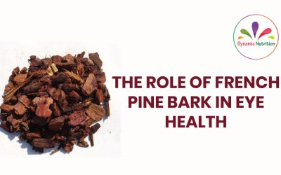 The Role Of French Pine Bark in Eye Health