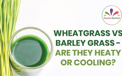 Wheatgrass vs Barley Grass – Are They Heaty Or Cooling?