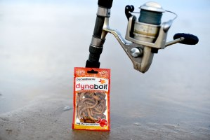 sandworms the best fishing bait for dusky fleathead