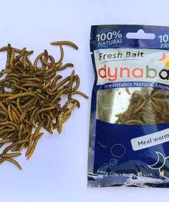 mealworms trout fishing bait
