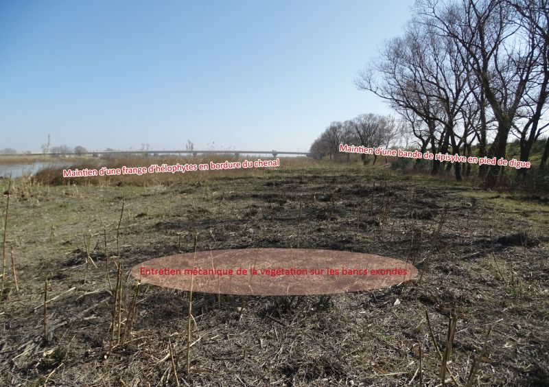 Photo et descriptif de la gestion de la végétation aux abords de la Durance