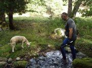Loïc et un agneau peu farouche et très curieux