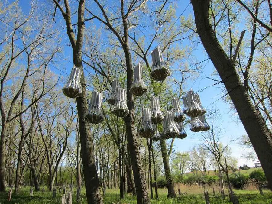 Hanging Plants Design