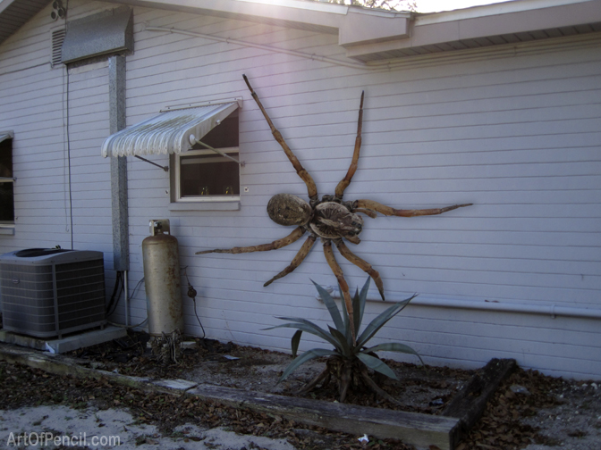 Spider Found Texas Biggest