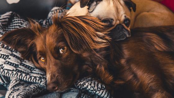 Steun je hond
