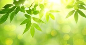 feuilles vertes et soleil