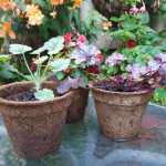 plant pots made from coir 9cm